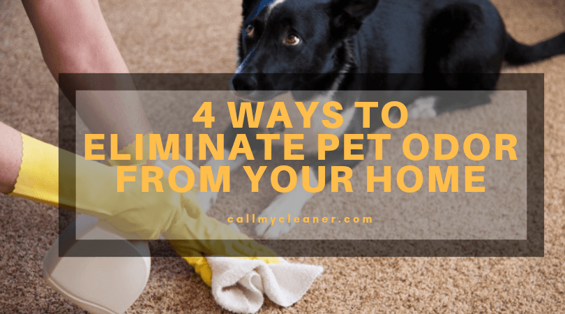 4 Ways to Eliminate Pet Odor From Your Home